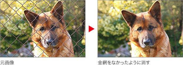 元画像 → 金網をなかったように消す
