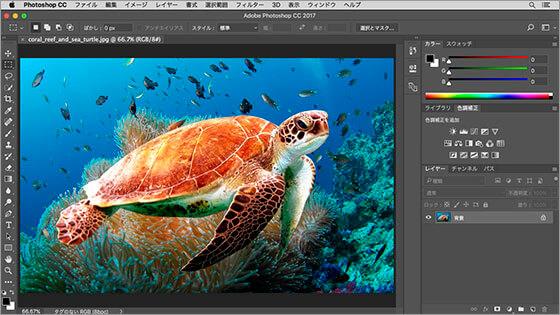 サンゴ礁とウミガメの素材画像を開く